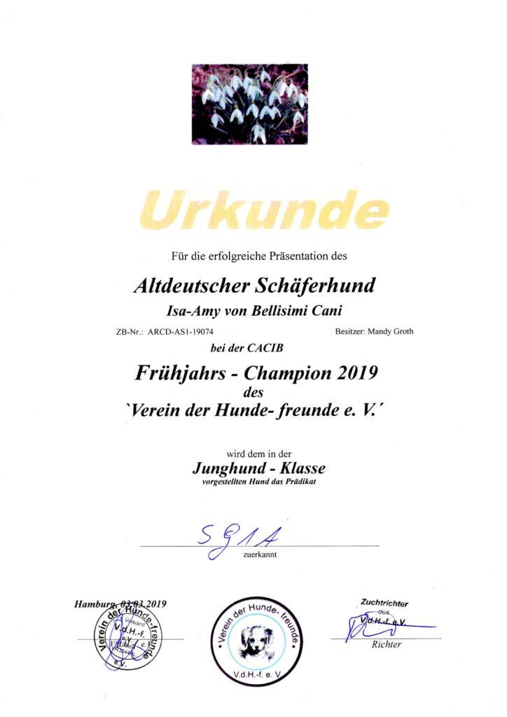 Amy - Urkunde Frühjahrs-Champion 2019