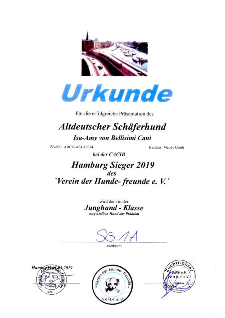 Amy - Urkunde Hamburg Sieger 2019