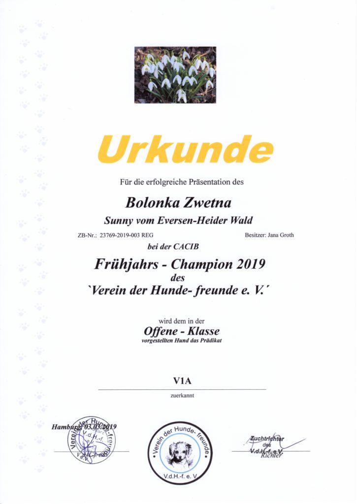 Urkunde Frühjahrs Champion 2019 Sunny