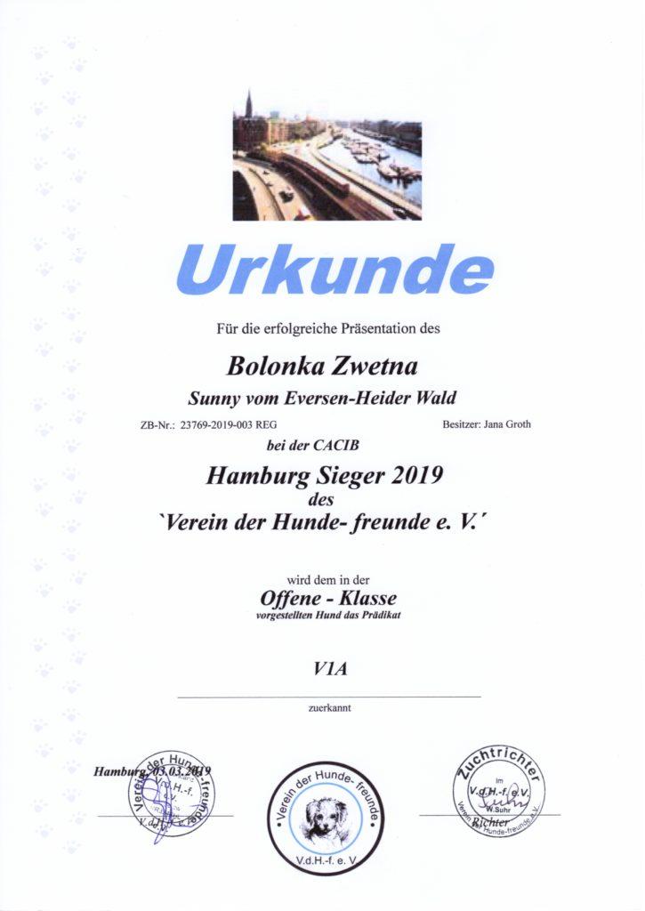 Urkunde Hamburg Sieger 2019 Sunny