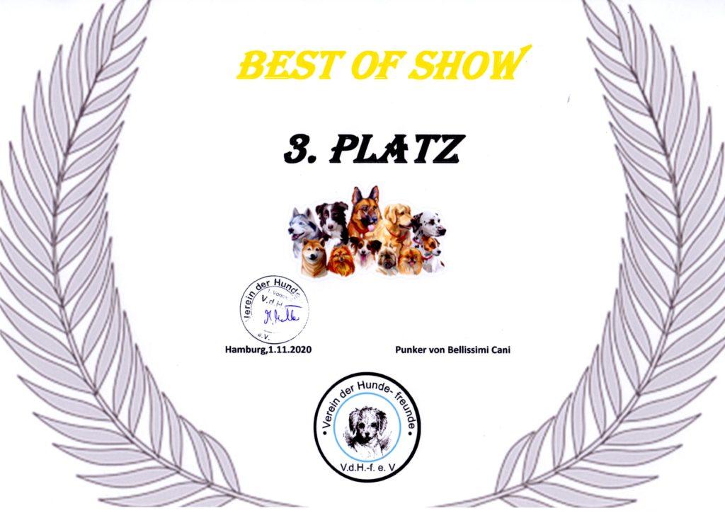 Kira - Best of Show 3. Platz 2020-11-01