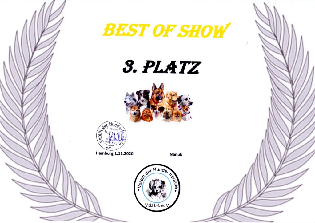 Nanuk . Best of Show 3. Platz 2020-11-01