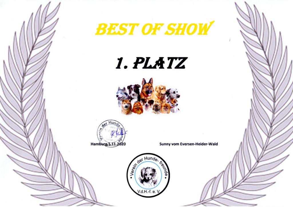 Sunny - Best of Show 1. Platz 2020-11-01